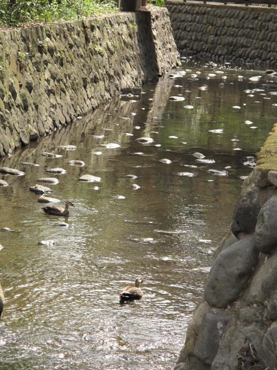 東京都内で緑あふれる大自然を満喫しよう!等々力渓谷を歩くコース(東京文化財ウオークから)