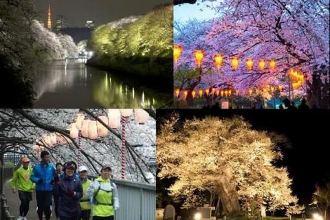 3/29(水) 夜桜観賞RUN
