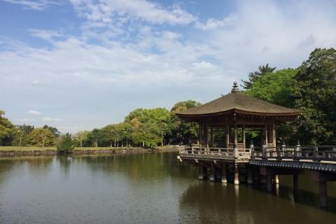スロージョグ@奈良公園【ランfor熊本】