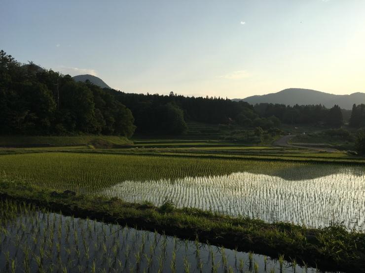 木島平村はゴールドプレミアムライスAAA認定産地です。やまだ農園(ALP)のコシヒカリをどうぞ!