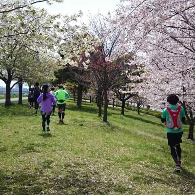 ランステ:お出かけスペシャル「里山で桜を愛でラン」27km