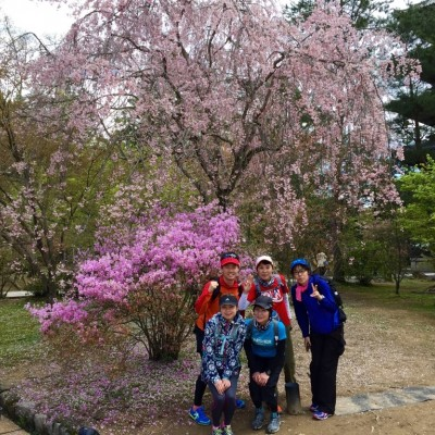 仁和寺の八重桜