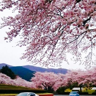 桜トレイルランニング! 4/9 『13km』