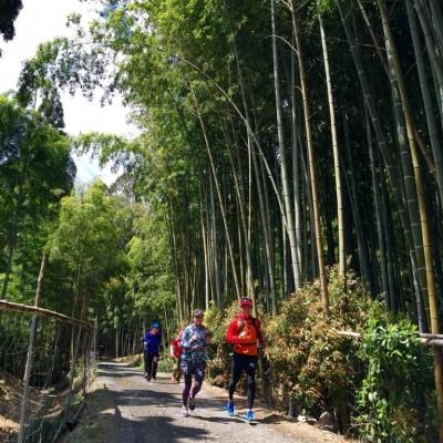京都随一の美しさを誇る、嵯峨野・嵐山の竹林