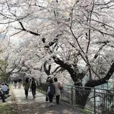 """平日の夕暮れ=お花見観光ラン10km~5kmは中野界隈を巡り、""""綺麗に走るレッスン""""も開催です"""