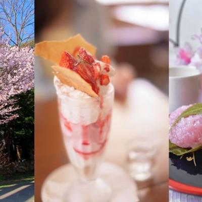 道内初開催! ~春の訪れを感じる桜&感動スイーツ巡り~ 「走ろうにっぽん」ロゲイニング