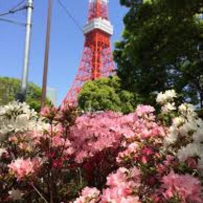 平日午前の百花繚乱サイクルツァーは新宿から皇居、銀座、日本橋、淺草、上野を巡る42km~10km