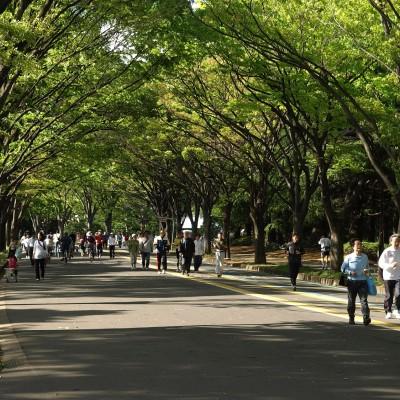 フレッシュラン@駒沢新規メンバー募集:毎週水曜日・駒沢公園(コーチ指導あり)