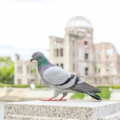 広島には日本一・日本初・日本唯...