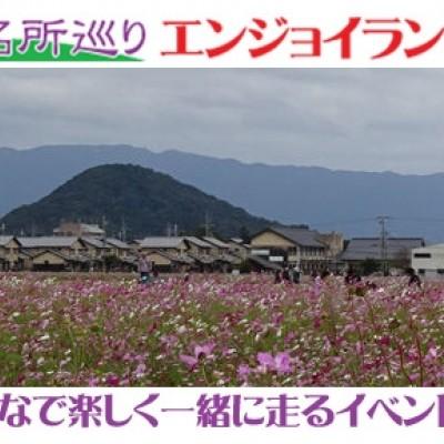 第14回観光ラン・奈良名所巡りランニング~大和は国のまほろば、藤原宮跡のコスモスと大和三山の眺望