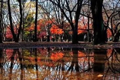 紅葉を満喫し、記録更新と健脚が叶う!中野ランは外苑&原宿&荻窪を巡る30km&20km&10km他