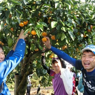11月23日(金祝)秦野の里山 紅葉・温泉・みかん狩りを楽しむマラニック22km