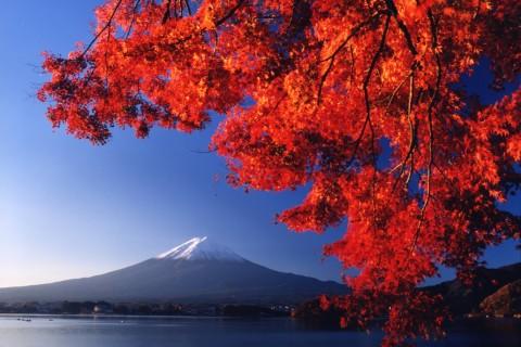 【Barely late entry】第6回富士山マラソン(42.195km、チャリティファンラン)