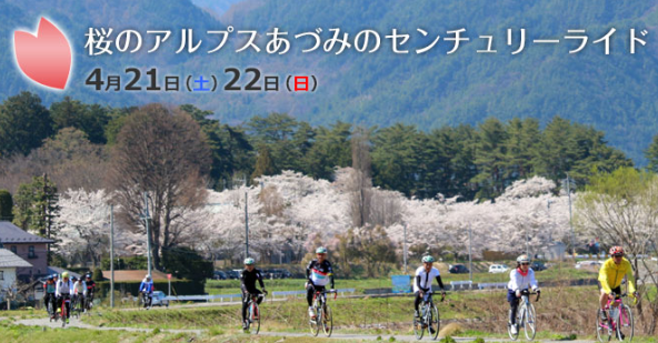 AACR2017【桜】 サンプル
