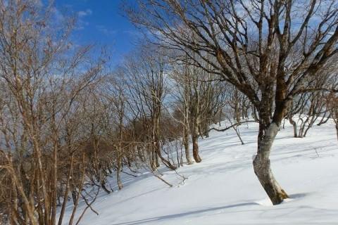 ≪ワンデルング≫[滋賀]雪の蛇谷ヶ峰アタック!【中(初)級】