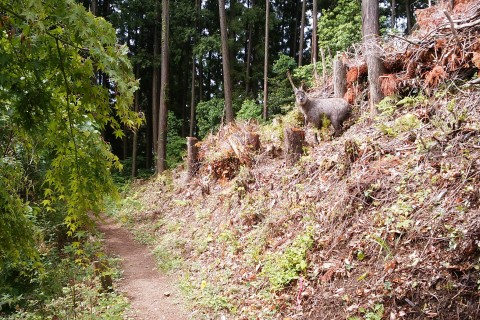【満員】RCR Ome Trail Running【20km】