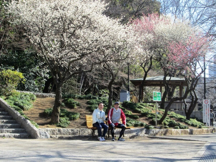 約6kmが神田上水取水堰があった江戸川公園です。紅白の早咲き梅が出迎えます。