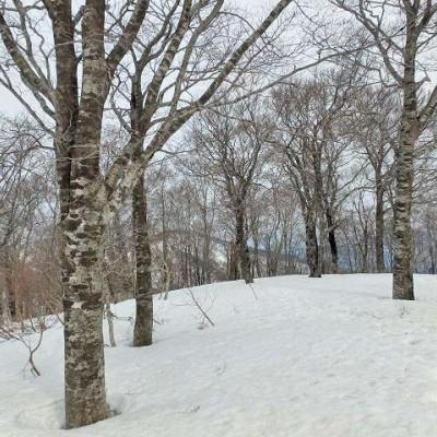 ≪ワンデルング≫[滋賀]残雪期に目指す滋賀最北の山!横山岳登頂【中・上級】