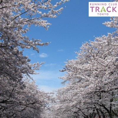 お花見RUN@上野公園