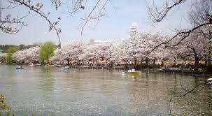 神田川、井の頭公園、善福寺川、妙正寺川と武蔵野の水辺を巡ります!