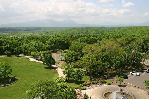 池のまわりの森林浴コース!緑ケ丘公園周回コース(苫小牧市)