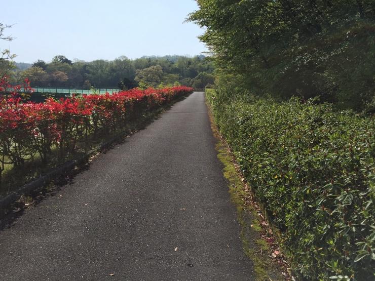 滋賀県希望が丘文化公園 林間ミドルコース