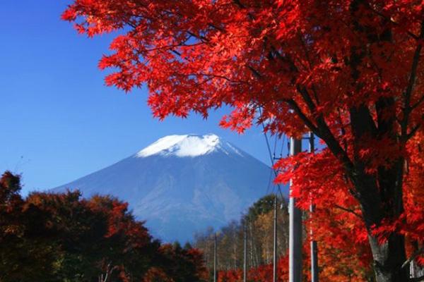 自然の林を縫って走る恩賜林庭園コース(富士吉田市)