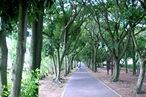 フラットな木陰道!産業道路沿い緑地公園コース(鹿児島市)