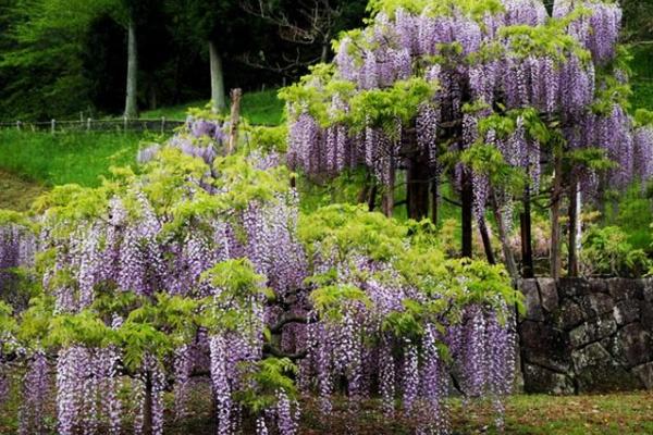 ボートや蓮の花を眺めて!蓮華寺池周回コース(藤枝市)