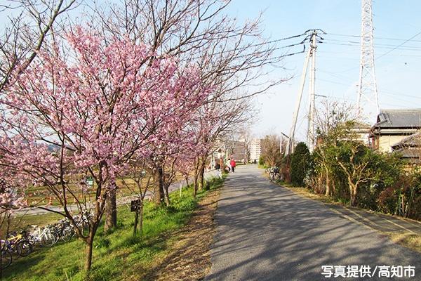 平坦で走りやすい鏡川河川敷コース(高知市) | e-moshicom(イー・モシコム)