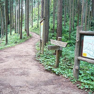 山道の先には絶景!青梅丘陵ハイキングコース(青梅市)