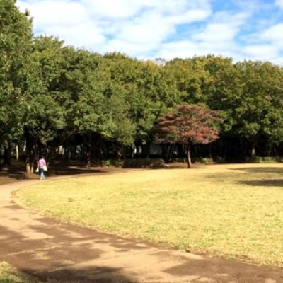 100周で100kmのリレー!行田公園周回コース(船橋市)