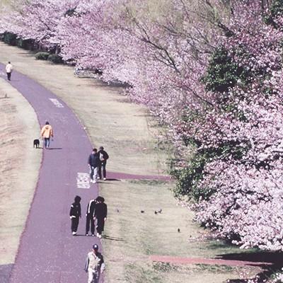多摩川かぜのみちLSDコース(府中市)