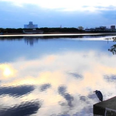 谷津干潟、野鳥観察ランコース(習志野市)