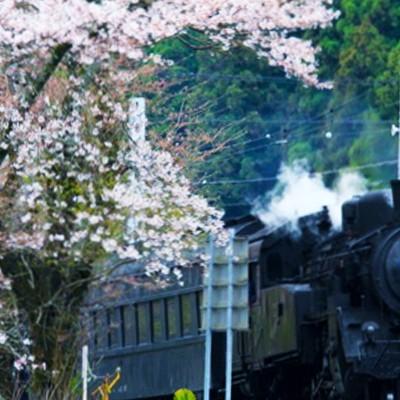 大井川鐡道SLコース(島田市)