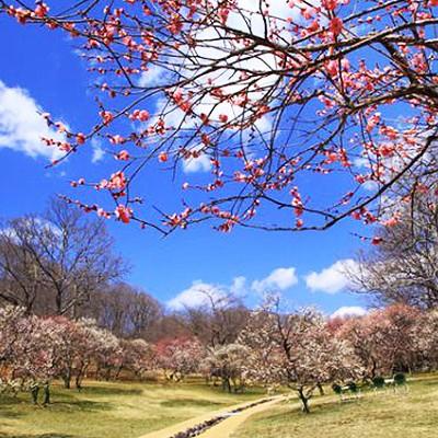自然をのんびり楽しむ!秩父ミューズパークコース(小鹿野町)