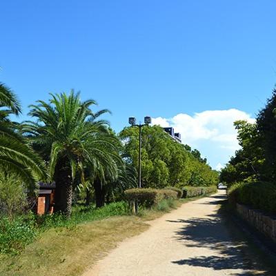 ロング走にぴったり。六甲アイランドの緑道コース(神戸市)