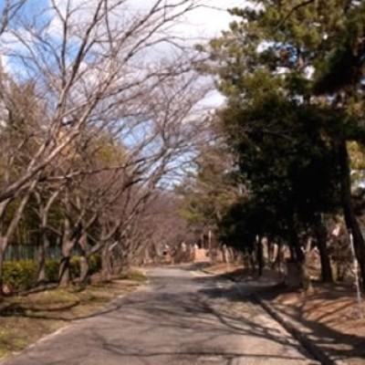 自然いっぱいの広大な公園。服部緑地コース(豊中市)