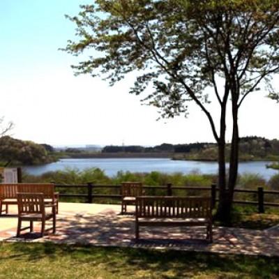 野鳥が集まる沼の自然!古代の里・化女沼コース(大崎市)