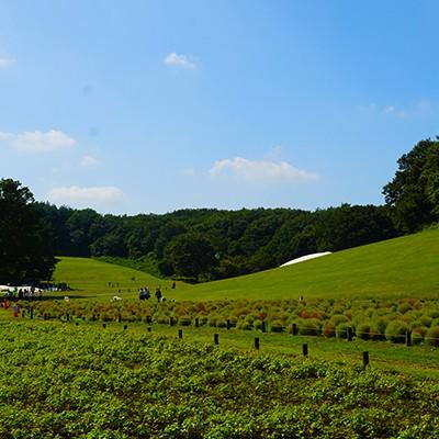 国営武蔵丘陵森林公園クロカンコース(滑川町)