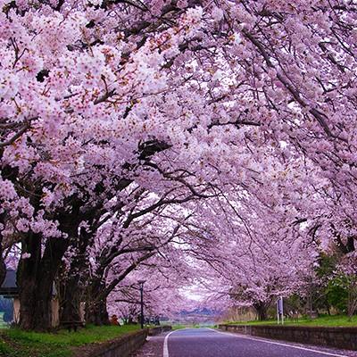 筑波山を眺めながら走るりんりんロードコース(桜川市)