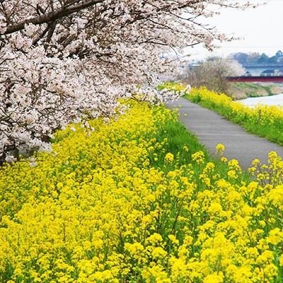 女子競歩オリンピアンも練習した勤行川沿いコース(筑西市)