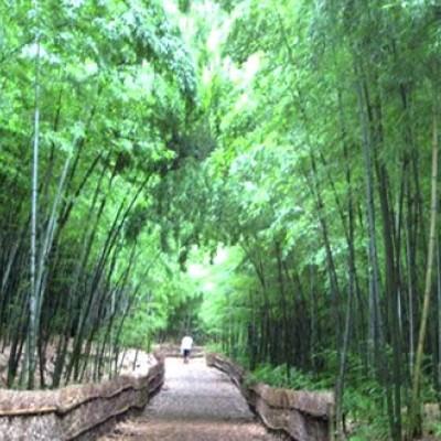 広大な自然が魅力、大高緑地公園コース(名古屋市)