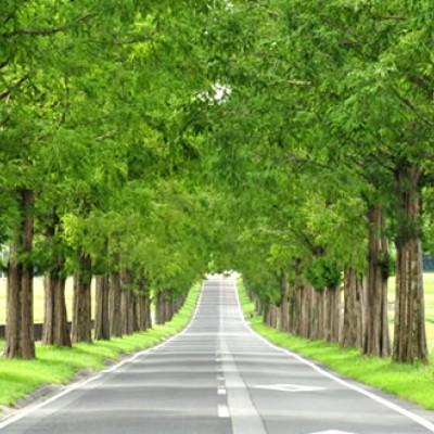 農業公園を貫くメタセコイア並木道コース(高島市)