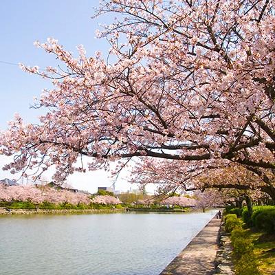 城址を囲む堀端を走る佐賀城公園コース(佐賀市)