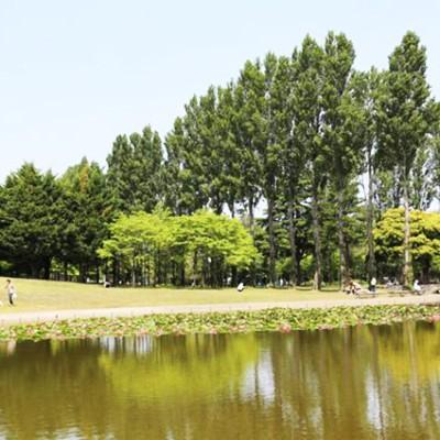 狭山稲荷山公園・彩の森入間公園コース(狭山市)