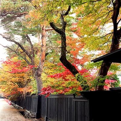 みちのくの小京都角館・武家屋敷ランコース(仙北市)
