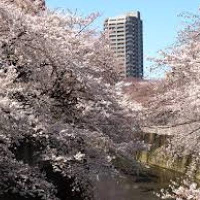 お洒落に!お花見山の手ランは恵比寿ガーデンプレイスや新国立競技場も巡る21km~10km