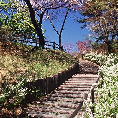 田園を走り、山を上る高森山総合運動公園コース(十和田市)
