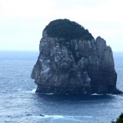 地魚が楽しみ!下甑島(しもこしきじま)コース(薩摩川内市)